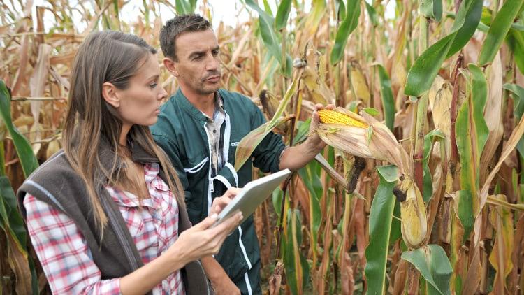agriculteurs dans un champ de blé avec tablette