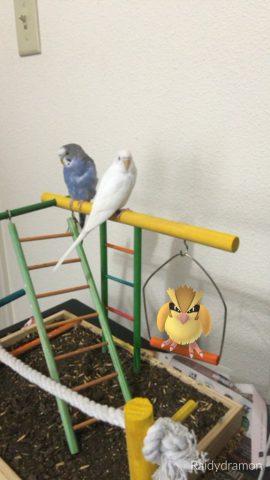 Jeu pokémon go piafabec en compagnie d'autres oiseaux